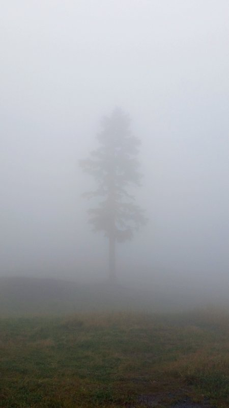 76 Vancouver - Grouse Mountain Misty Tree a