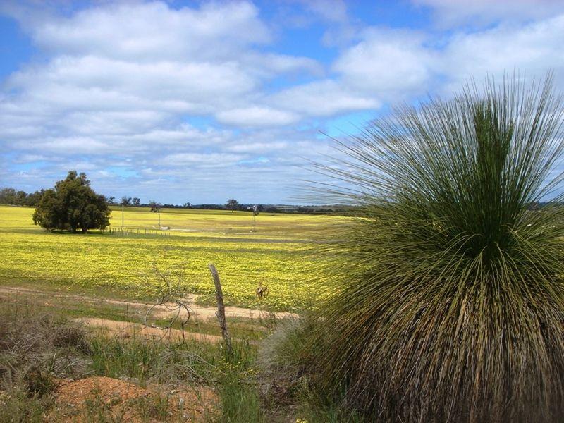 Toodyay canola field by aussirose - Toodyay