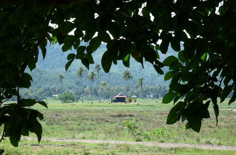 Rice Museum - Pulau Langkawi - Pulau Langkawi