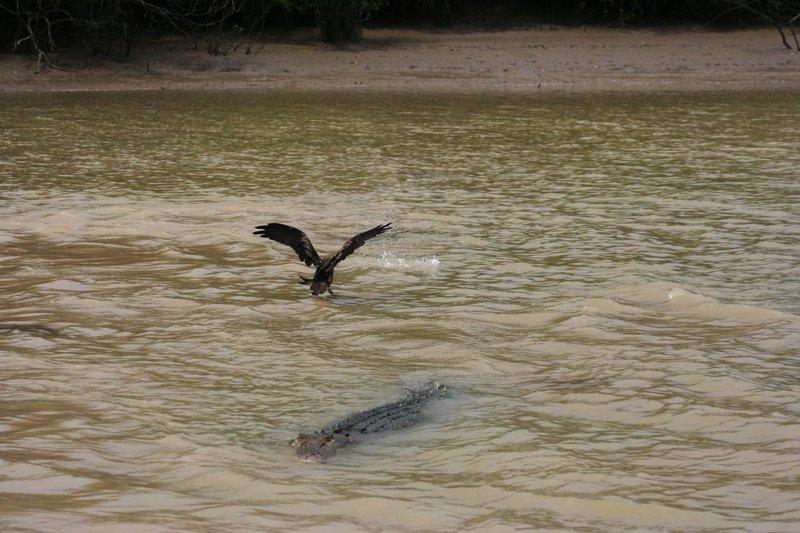 Darwin - Jumping Croc Cruise
