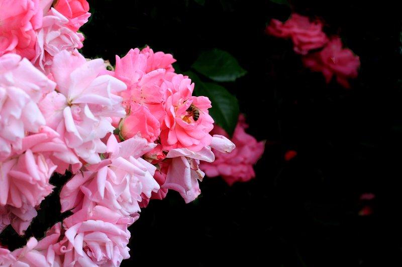 Flower - favourite