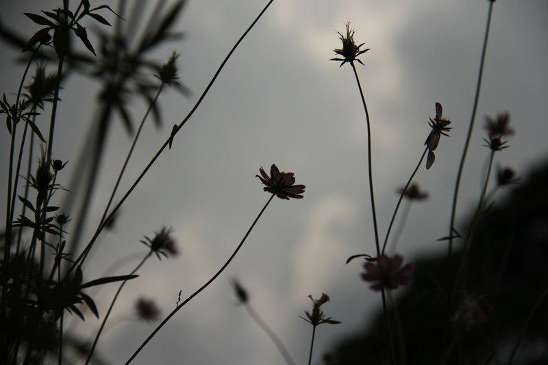 Flowers Grey Mist