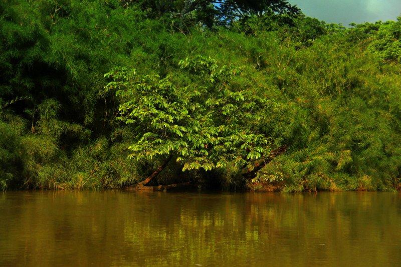 Jungle River 1