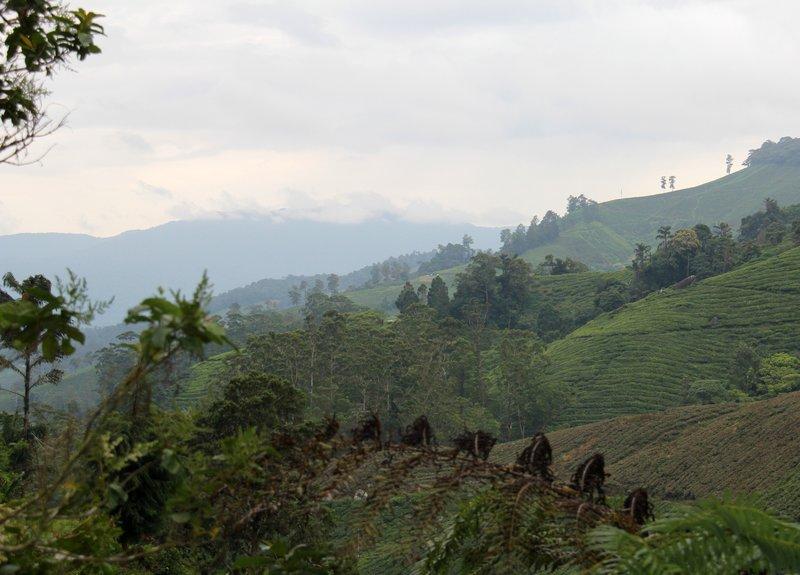 Malaysia - Cameron Highlands - Mountains