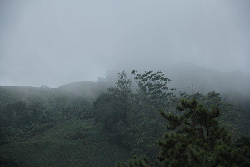 Malaysia - Cameron Highlands - Mountains Mist