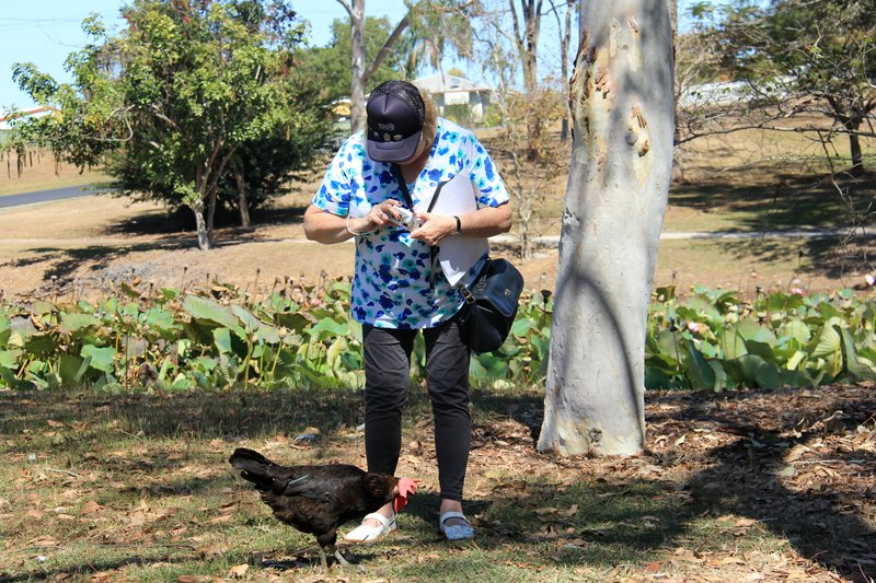 TLog - Dorrise the chook whisperer 1