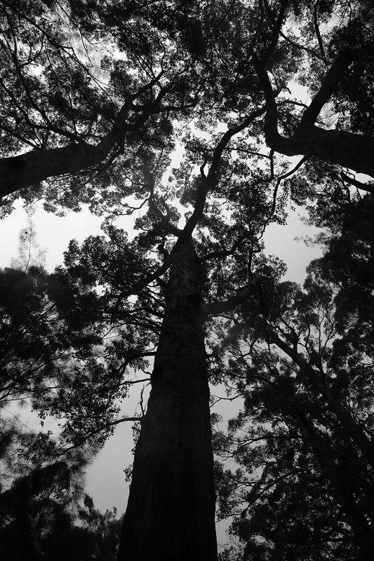 Tree Top 5