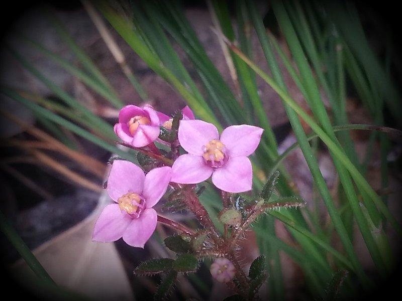 Wildflowers 6