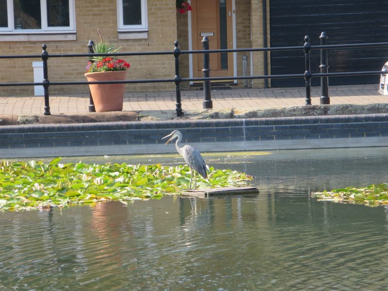 Wildlife Around Wapping
