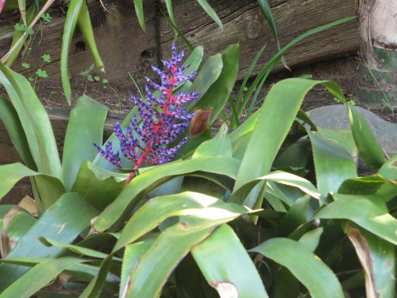 The Alameda Botanic Gardens