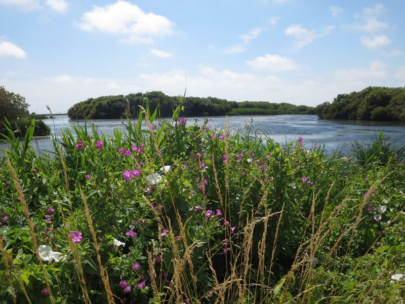 A Walk at the Nature Reserve