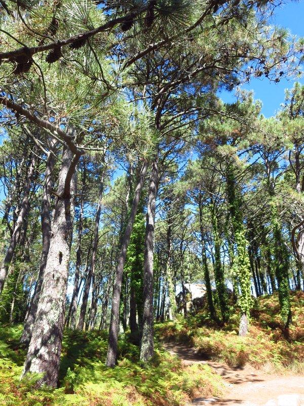 Hiking in Cies Isles