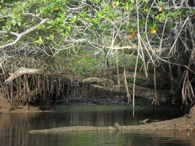 6444852-Black_Turtle_Cove_Isla_Santa_Cruz.jpg