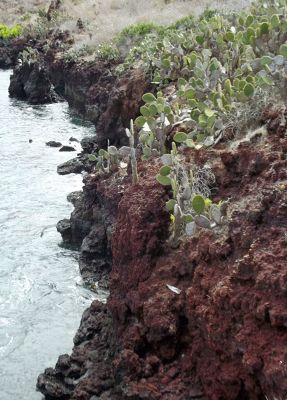 6461847-On_the_cliffs_Isla_Rabida.jpg