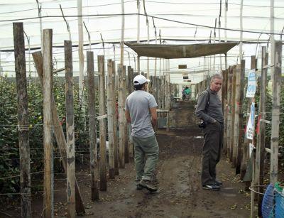 6468903-Roses_growing_Provincia_de_Cotopaxi.jpg