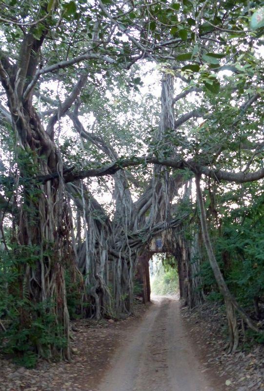 Near the entrance - Ranthambore National Park