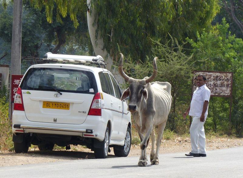 Our driver Mehar, on the road near Sadri