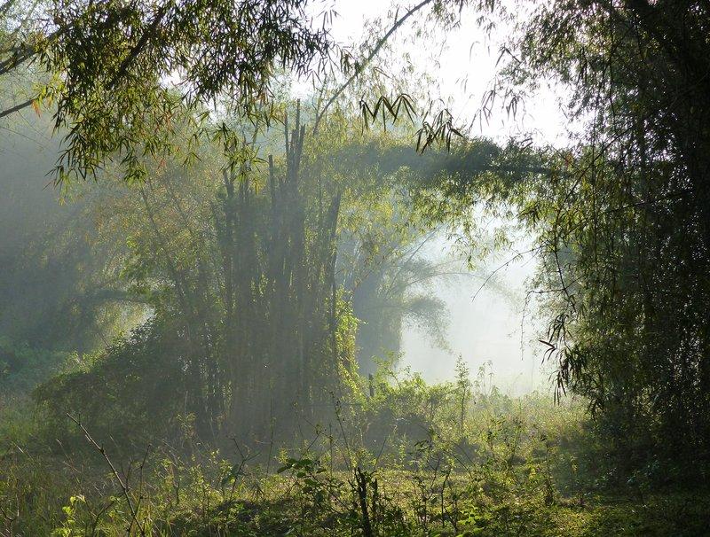 Bamboo forest, Periyar