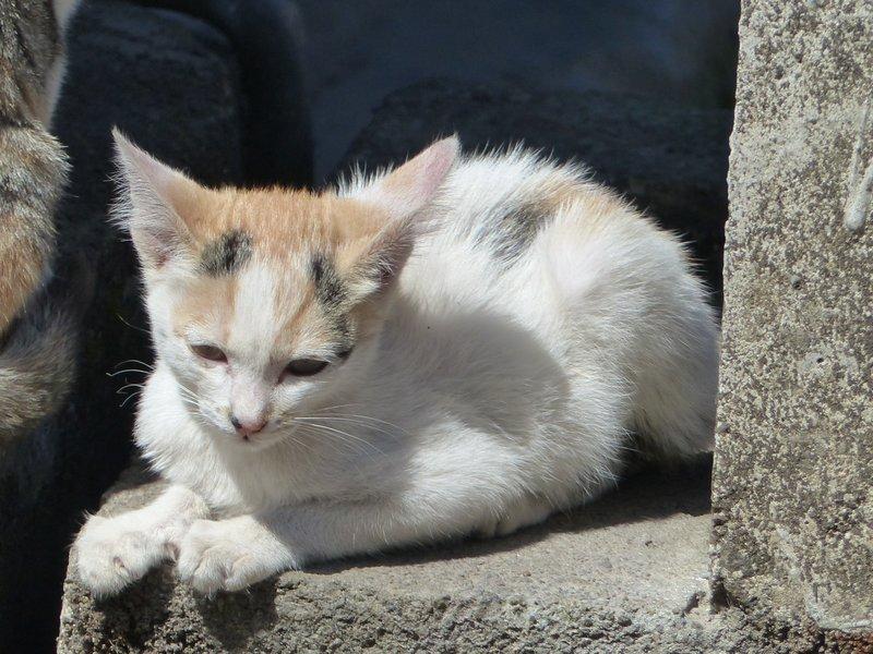 Kitten, Munnar