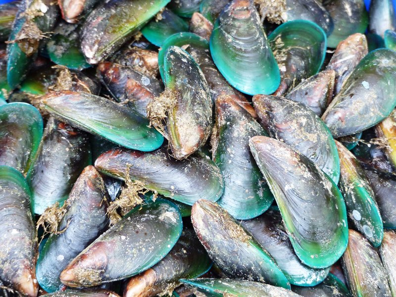 Mussels, Fort Cochin fish stall