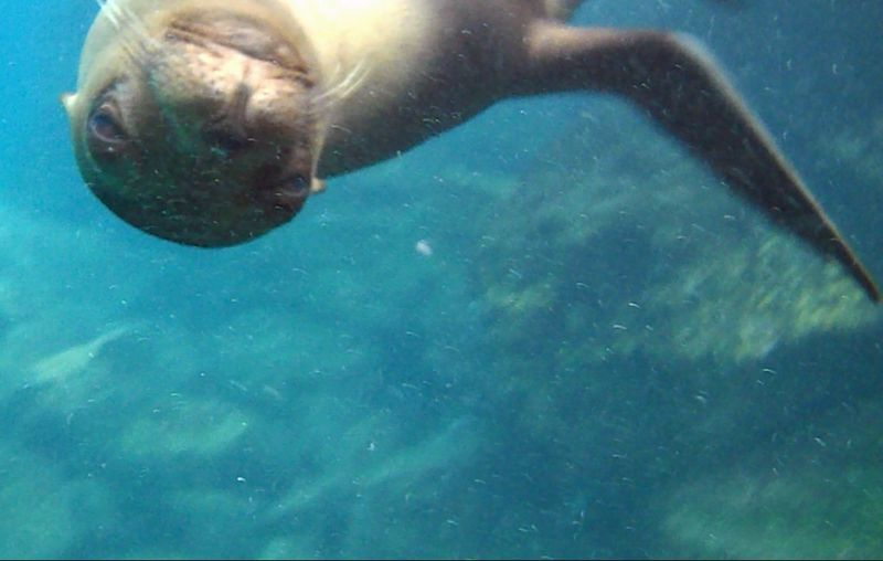Snorkelling in the Galápagos - Santa Fe