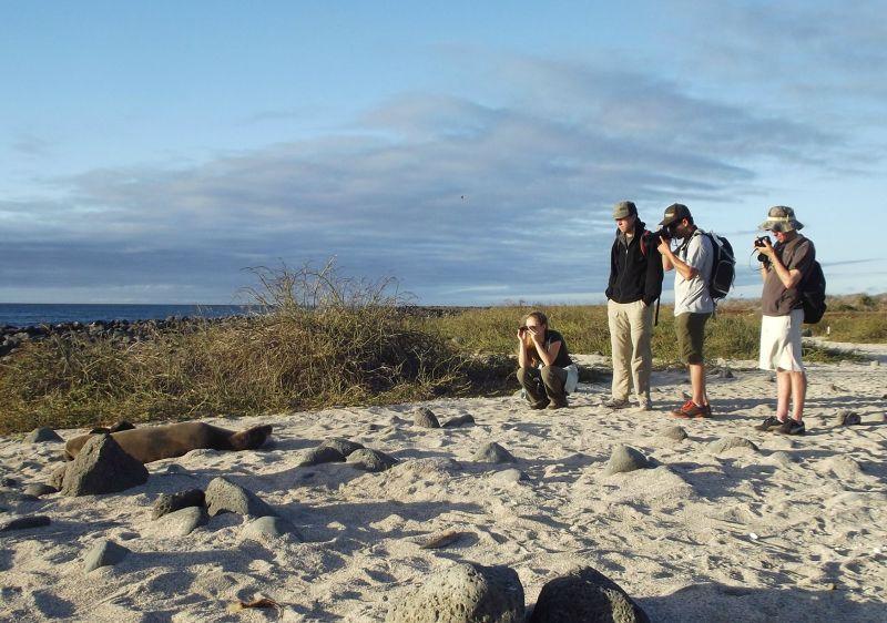 large_6444774-On_the_beach_Galapagos_Islands.jpg