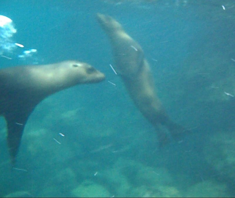 Snorkelling with sea lions - Santa Fe