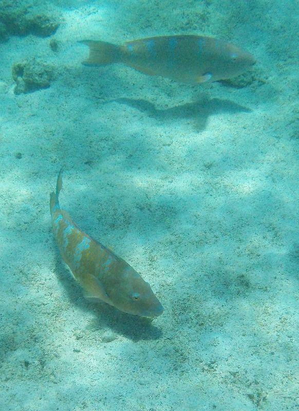 Snorkelling - Isla San Salvador