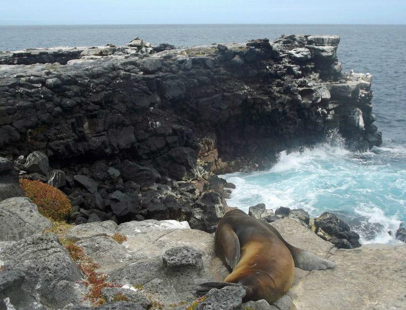 Sea lion on the cliffs - Islas Plazas