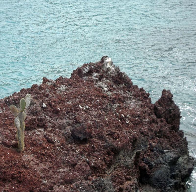 On the cliffs - Isla Rábida