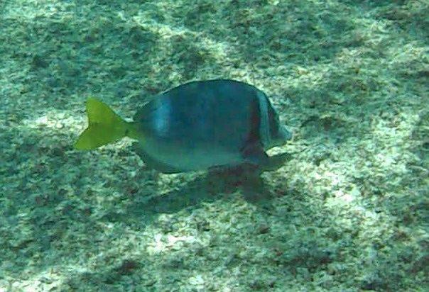 Snorkelling off Isla San Salvador