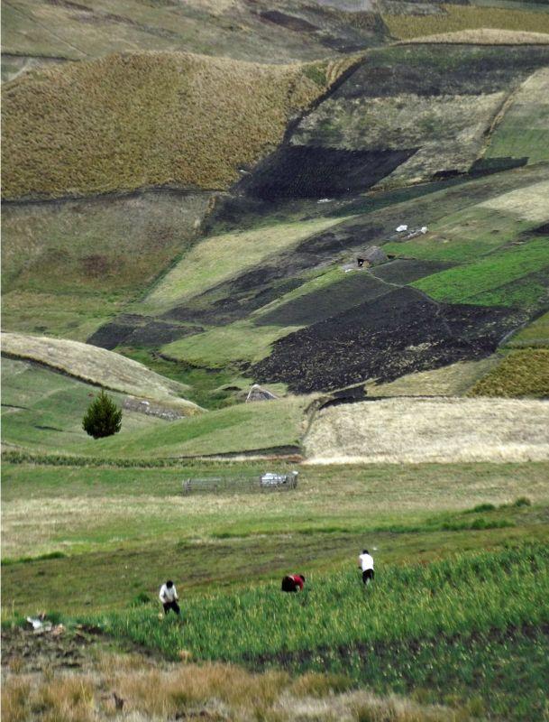 Farming the highlands - near Laguna Quilotoa