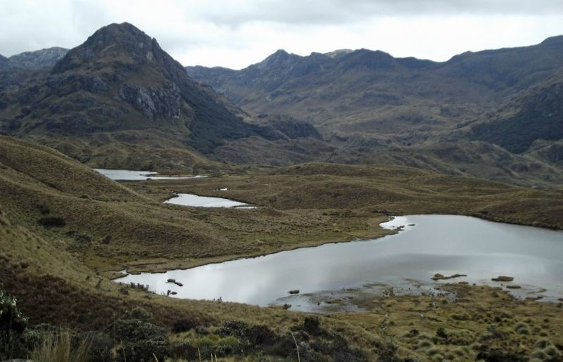 large_6508793-In_Cajas_National_Park_Guayaquil.jpg