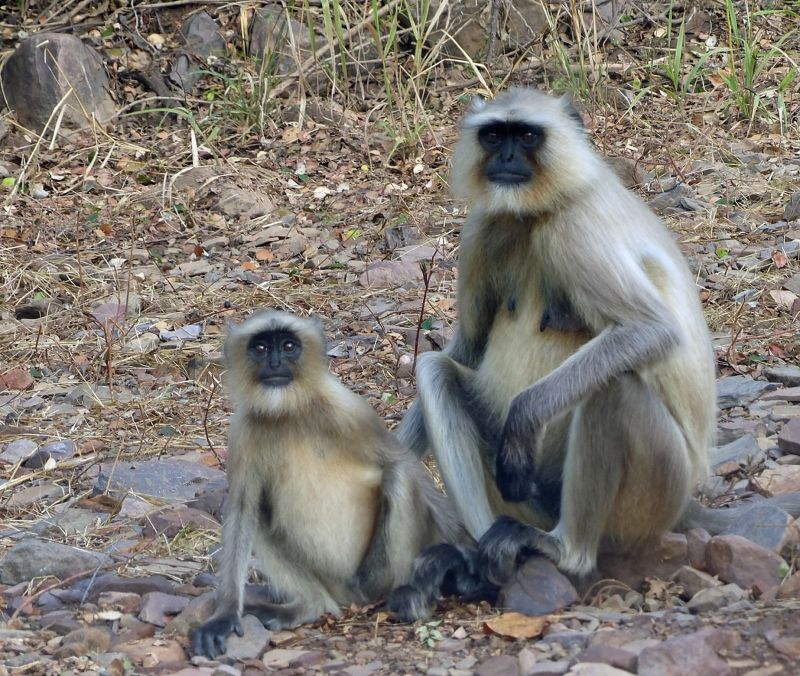 Mother and child - Ranthambore National Park