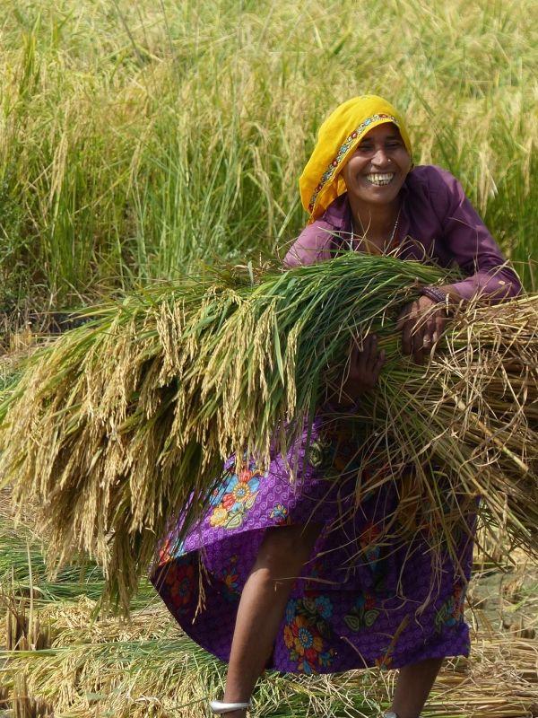 Working in the fields near Sawai Madhopur