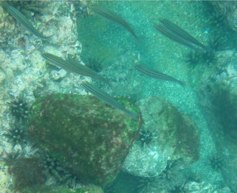 Snorkelling in St James Bay - Isla San Salvador