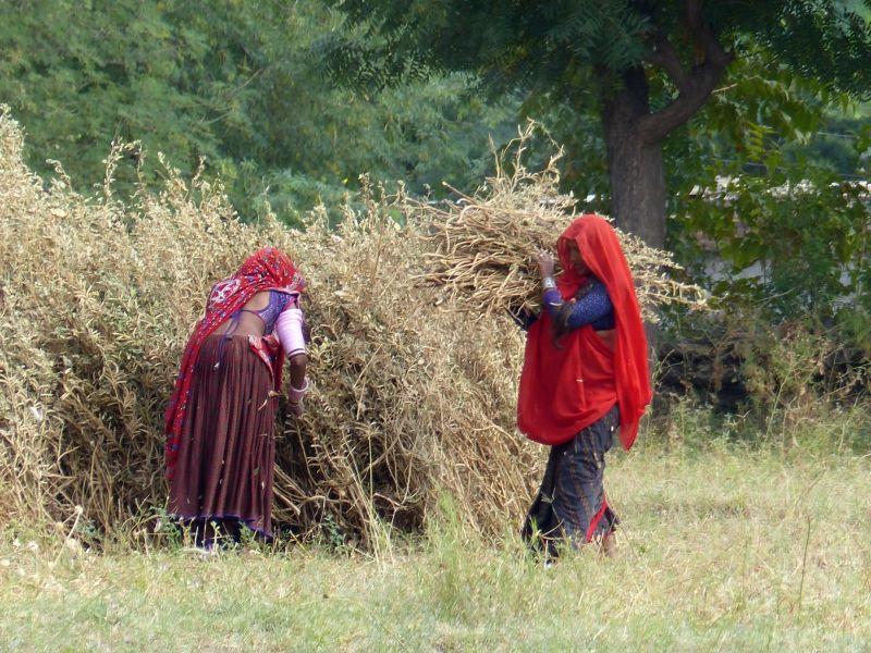 Farming near Sadri
