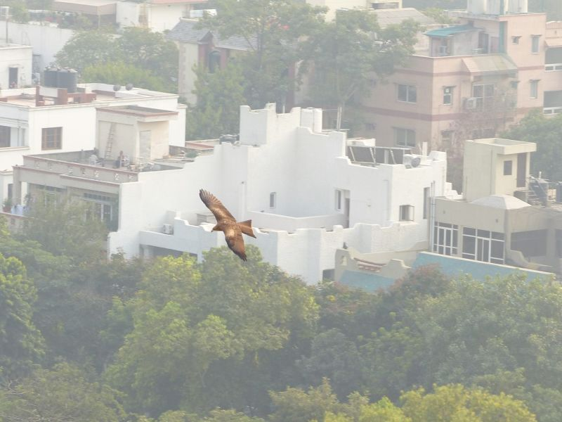 View from the roof - Delhi
