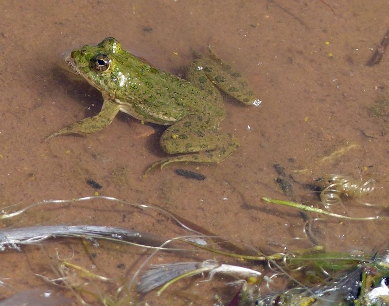 There are tiny frogs too! - Khichan