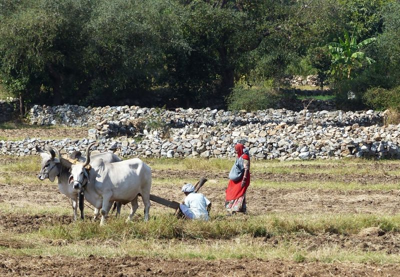 Ploughing - on the road to Udaipur