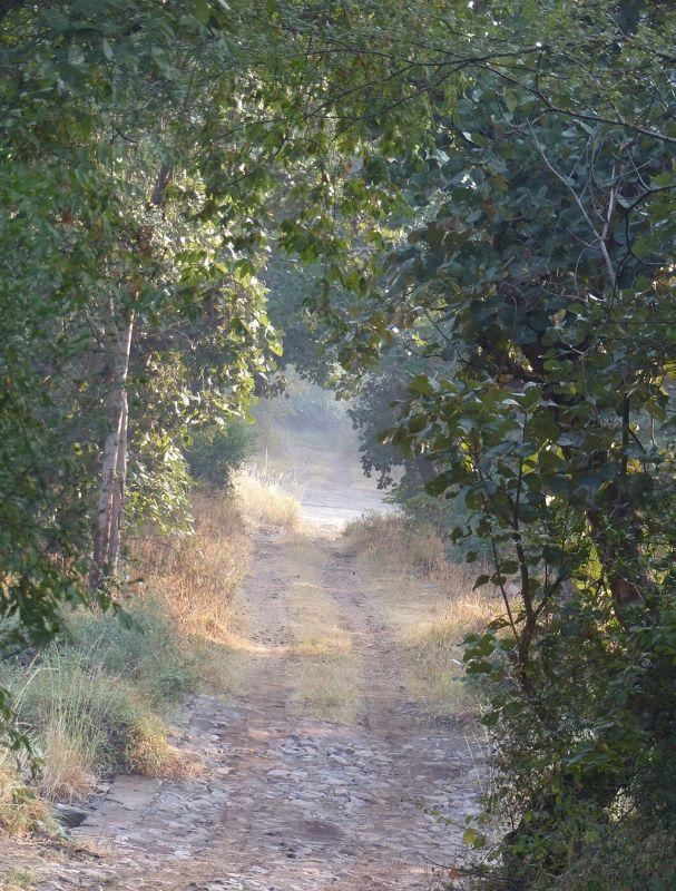 Road through the park - Ranthambore National Park