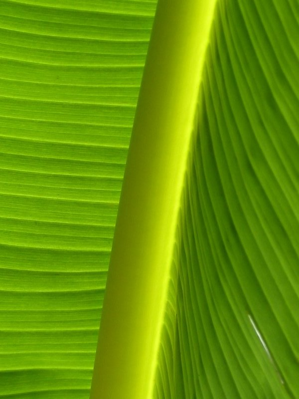 Banana leaves, Kerala