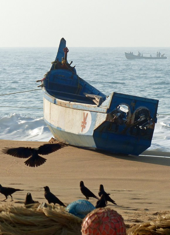 Fishing boat and crows