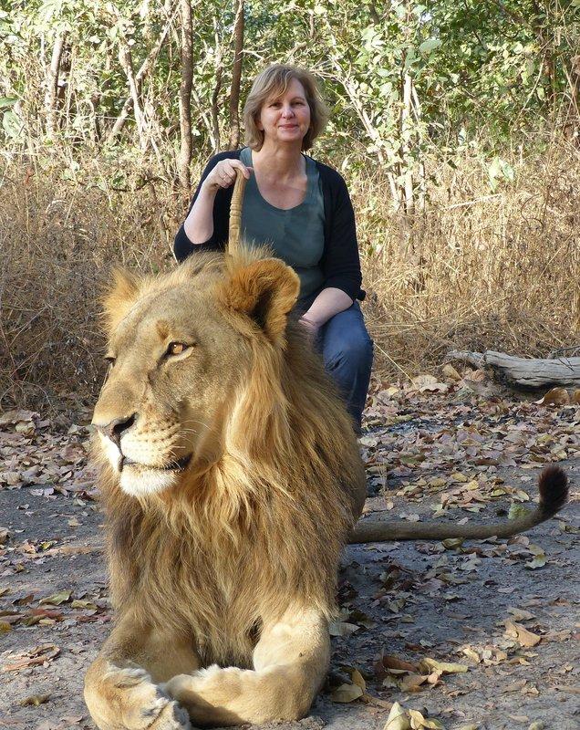 Lion at Fathala