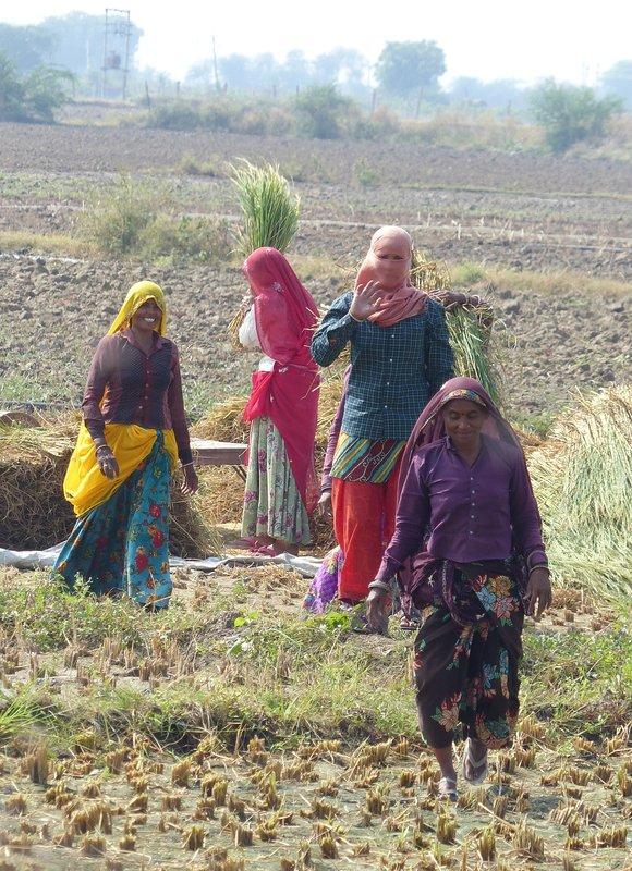 Farming near Sawai Madhopur