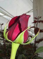 569301876468902-Visit_a_flow..e_Cotopaxi.jpg