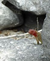 6444706-Endemic_lava_lizard_Galapagos_Islands.jpg