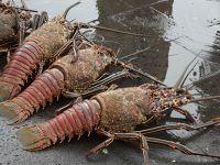 6444818-Fish_market_Puerto_Ayora.jpg