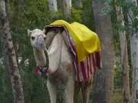 7524360-Near_Mehtab_Bagh_Agra.jpg