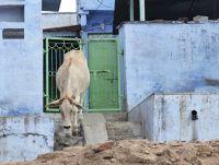 7551696-In_the_village_Chittaurgarh.jpg